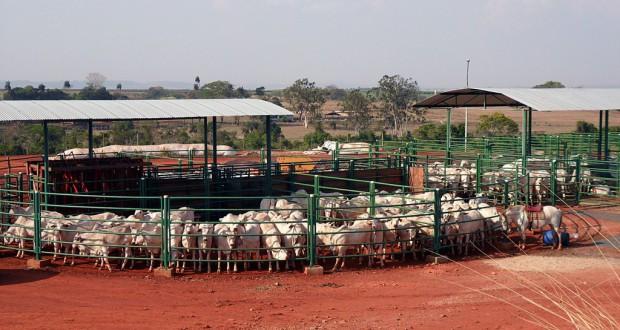 主要輸出品の食肉も18%の減少を記録した(FMVZ/USP)