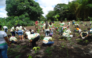 八木農場での植樹に励む小中学生ら