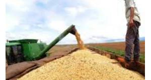 大豆の収穫(Agência Brasil)