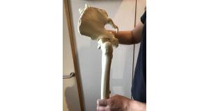 骨盤の動きの画像(間接がむき出しになった状態)