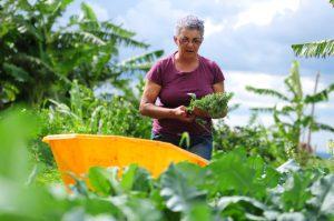 農業部門が落ち込むGDPのけん引役となれるか? (参考画像 - Pedro Ventura/Agência Brasília)
