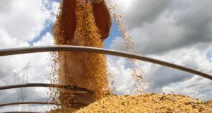 大豆の収穫の様子(Foto Jonas Oliveira)