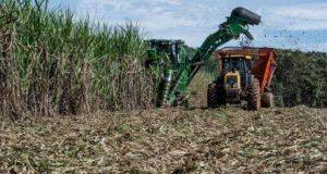 ブラジル中部マット・グロッソ州でのサトウキビ収穫の様子(Mayke Toscano/Gcom-MT)