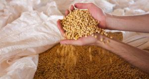 ブラジルは世界トップクラスの大豆生産量を誇る(参考画像 - Gilberto Marques/A2img/FotosPúblicas)