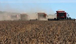 巨大な収穫機が横一列になって大豆を刈り入れる様子(Foto: Fernando Dias/Seapa)