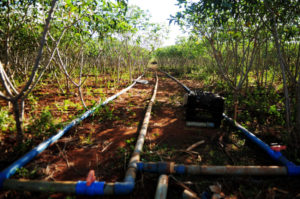 ブラジリア連邦区の灌漑施設(参考画像・Pedro Ventura/Agência Brasília)