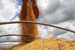 大豆の収穫の様子(参考画像・Jonas Oliveira)