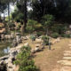 USP日本庭園、整備進む=110周年で皇族ご訪問を熱望