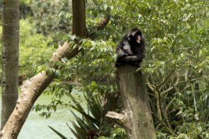 23日、サンパウロ市動物園が閉鎖された(Oswaldo Corneti/Fotos Públicas)