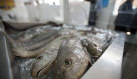 聖週間は肉に代わって消費量が増える魚(Arquivo/Agência Brasil)