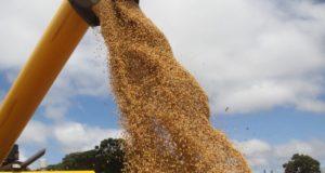 パラナ州でのとうもろこし収穫の様子(参考画像・Jonas Oliveira)