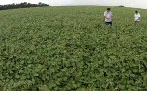 ブラジル北部での作物収穫の好調が、GDPを伸ばす力となった。(参考画像・CRISTINO MARTINS /Ag. Pará)