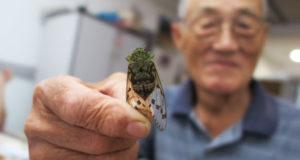 自宅裏庭で採ってきた蝉を持つ南雲さん
