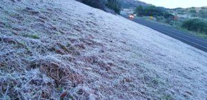 霜で真っ白になった野原(Mycchel Hudsonn Legnaghi/São Joaquim Online)