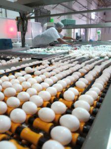 飼料供給の遅れが心配される日系養鶏場