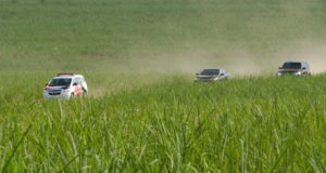 眞子さまご一行の車列が砂糖黍畑を駆け抜けた