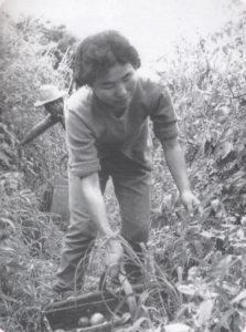 豊作だったトマトを収穫するコチア青年夫婦(『コチア青年―妻と歩んだこの道―』、コチア青年連絡協議会、2011年)
