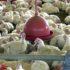 今年第2四半期の精肉部門は大きな損失を計上した(参考画像・Agencia Brasil)