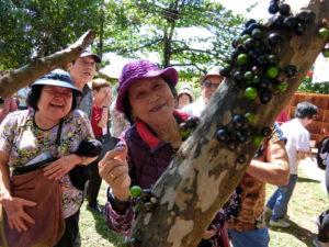 天然の木葡萄を味見する参加者