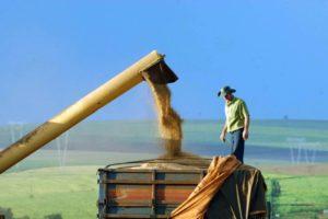 広大な国土を誇るブラジルは、大豆やとうもろこしを中心に大規模農業が行われている(参考画像・Jonas Oliveira/ANPr)