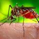 《ブラジル》感染症=麻疹の患者2千人超す=サンパウロ州ではデング熱に警告