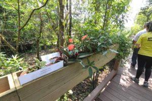 大西洋森林ならではの植生に触れられる(撮影・望月二郎)