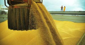 ブラジル産大豆の中国市場シェアには早急の影響はないと見られる(参考画像・Ivan Bueno/AG.PArana)