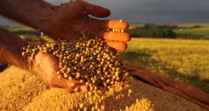 ブラジルの主要農産品の大豆(参考画像・Jonas Oliveira)