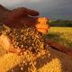 中国=ブラジル産農産物の輸入増える=大豆以外の品目も増加