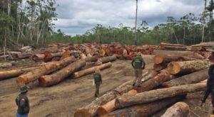 環境政策変更で増加が懸念される不法伐採(パラー州での取り締まり、イメージ映像、ASCOM SEMAS)