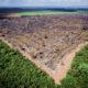 ボルソナロがアマゾン絶滅?!=地球温暖化を悪化させるか=パラグァイ在住 坂本邦雄