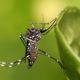 《ブラジル・アクレ州》州都でデング熱が急増=緊急事態宣言発令で、蚊の繁殖防止活動を強化