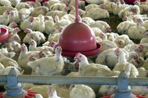 ブラジル産食肉の安全性が疑われる事件が頻発している(参考画像・Ag. Brasil)