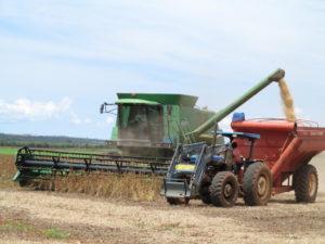 大豆の収穫の様子