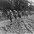 行進する第442連隊戦闘団の兵士(1944年、フランス、US Army [Public domain])