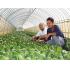頑張れ日本農業、農業後継者諸君(本人提供)