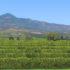 カリフォルニア州サンタパウラの広大なオレンジ畑(Ricraider, From Wikimedia Commons)