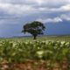 《ブラジル》農産物の生産量で新記録?=穀物や油糧種子の収量予測発表