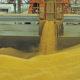 ブラジル産大豆の不買示唆=世界的なサケ養殖業者がアマゾン理由に