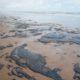 《ブラジル北東部》原油による海岸汚染続く=9州132カ所で100トン超=ウミガメの子放流も当面中止