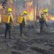 《ブラジル》法定アマゾン=森林火災で子供の入院倍増=SUSの負担150万レ増