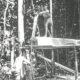 やまと心の森林農法=アマゾン移住90周年に想う=神奈川県在住 松田パウロ=(中)