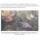 《ブラジル》北東部原油汚染=海洋生物の種類や数が激減=バイア州沖での調査で判明