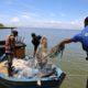《ブラジル》遂に南東部にも原油塊漂着=ウミガメの繁殖にも影響か