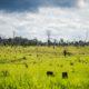 《ブラジル》法定アマゾンの森林伐採増加止まらず=11月は昨年の倍以上に