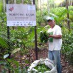 ラポザ村の山丸氏が再生した森の茶園