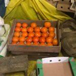 今年取れた柿 これは小さいとのこと
