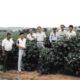 特別寄稿=白い黄金を求めて=ブラジル綿花の歴史と日本人綿作者=櫻井章生(さくらいあきふ)=《3》