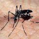 《ブラジル》連邦直轄区=デング熱患者が8割も減少=訪問や殺虫剤散布などが奏功?