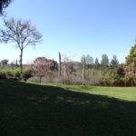 カンヒザクラの咲く中沢さん宅の庭先